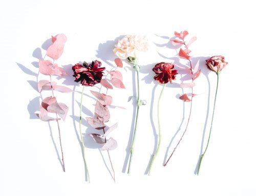 A Bach virágterápiában használatos vadvirágok